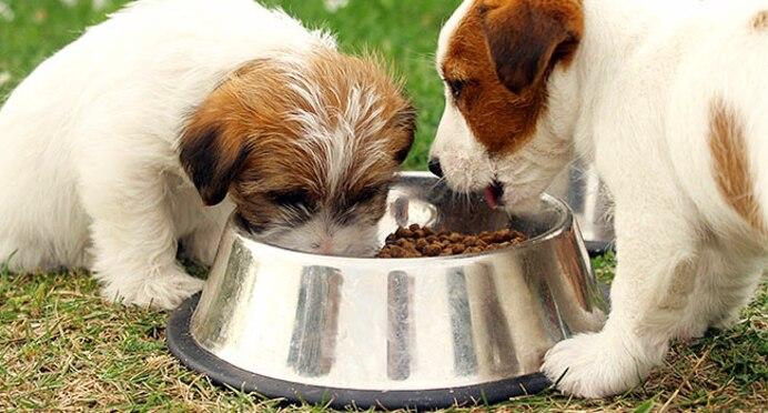 Animal Nutritionist